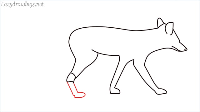 how to draw a wolf step (10)