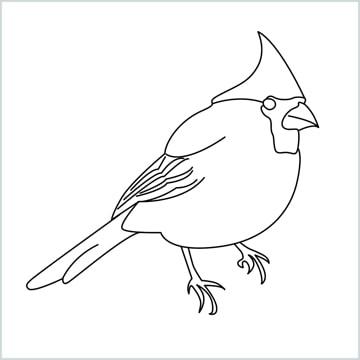 raw a cardinal bird