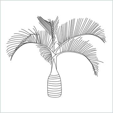 Areca tree drawing