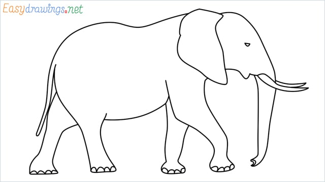 How to draw a elephant step by step for beginners