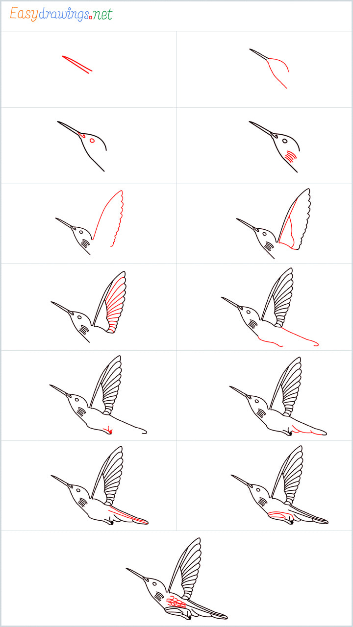 Overview for Hummingbird drawing all steps in one place