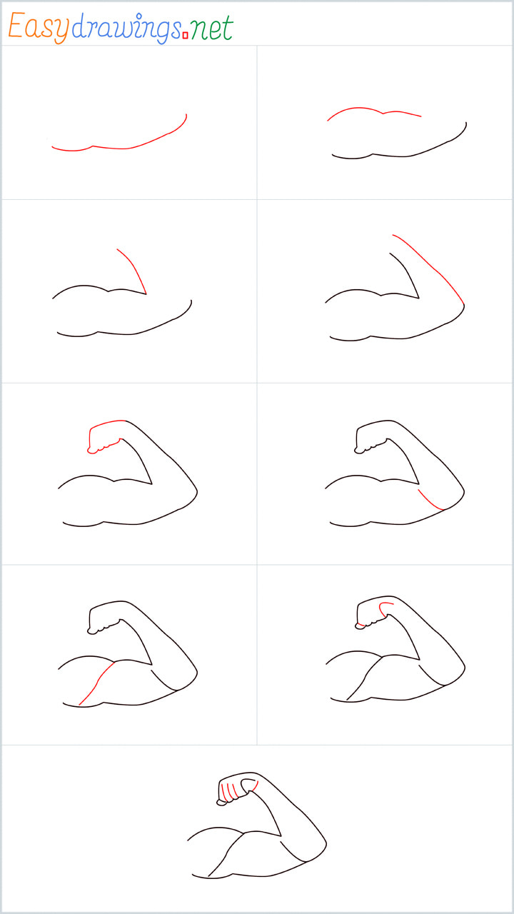 all reference outline drawing in one place for Arms drawing tutorial