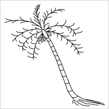 coconut tree drawing
