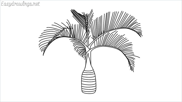 how to draw a Areca tree drawing step by step for beginners