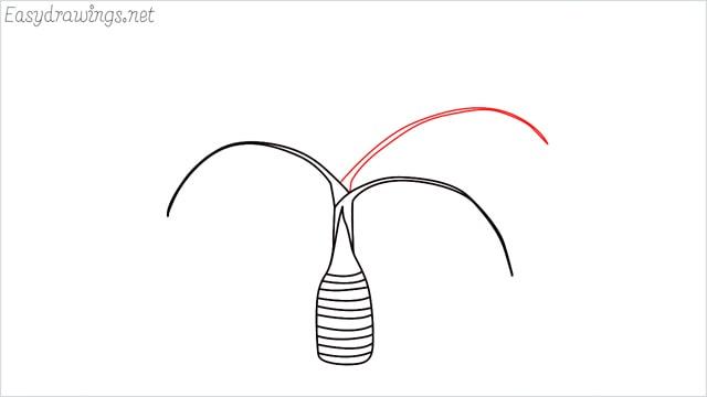 how to draw a Areca tree step (4)