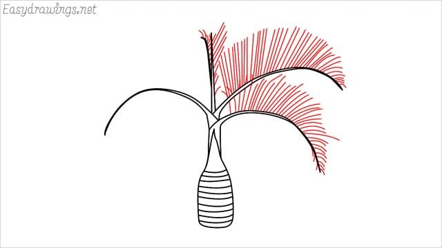 how to draw a Areca tree step (6)