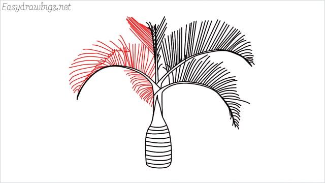how to draw a Areca tree step (7)