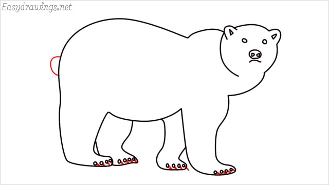 how to draw a brown bear step (10)