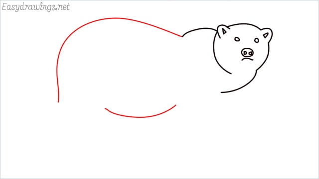 how to draw a brown bear step (6)