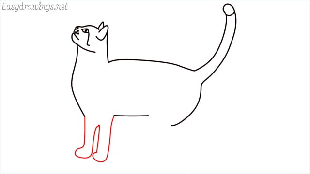 how to draw a cat step (11)