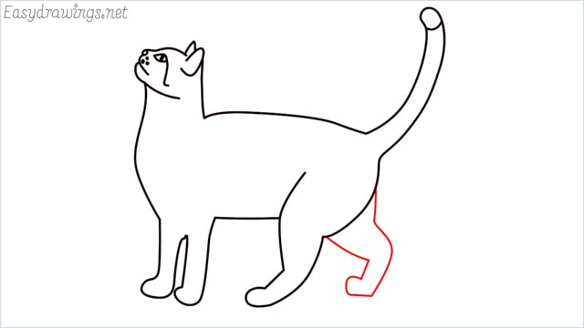 how to draw a cat step (13)