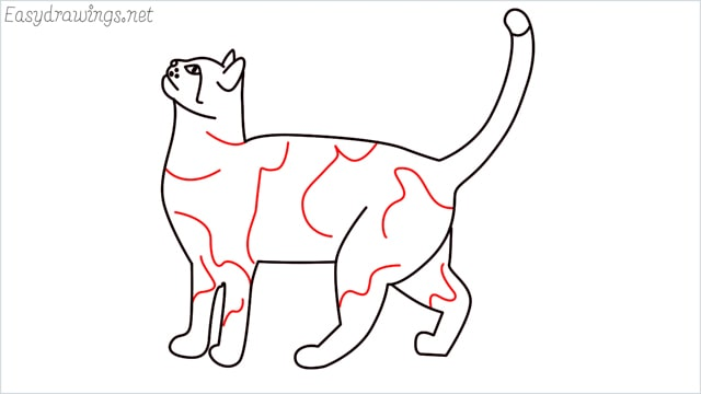 how to draw a cat step (14)