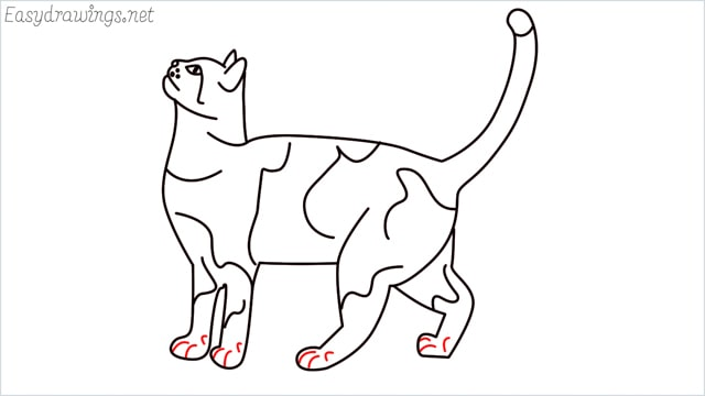 how to draw a cat step (15)