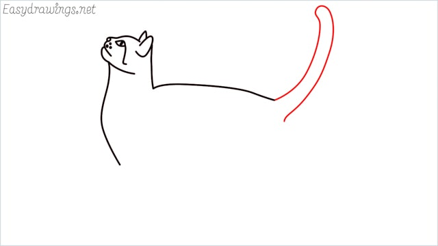 how to draw a cat step (9)