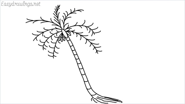 how to draw a coconut tree drawing step by step for beginners