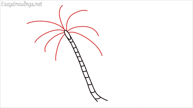 how to draw a coconut tree step (4)