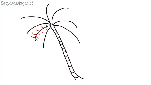 how to draw a coconut tree step (5)