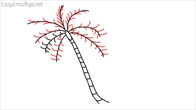 how to draw a coconut tree step (6)