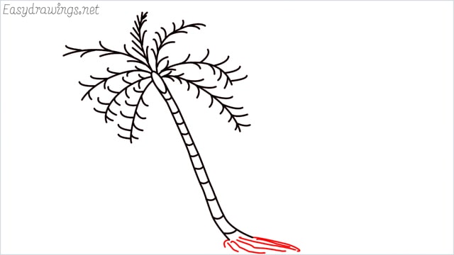 how to draw a coconut tree step (7)
