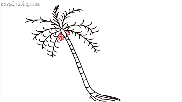 how to draw a coconut tree step (8)