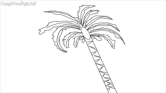 how to draw a date tree drawing step by step for beginners