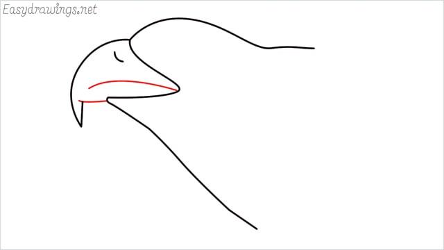 how to draw a eagle head step (5)