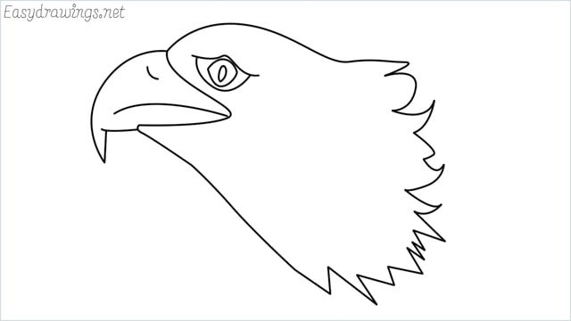 how to draw a eagle head step by step for beginners