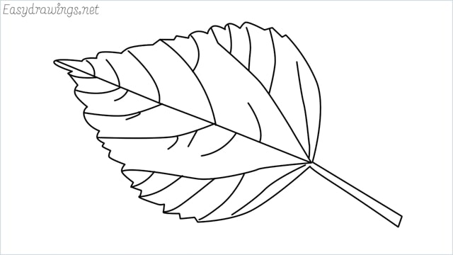 how to draw a leaf drawing step by step for beginners