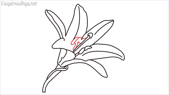 how to draw a lily step (11)