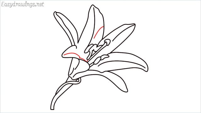 how to draw a lily step (12)