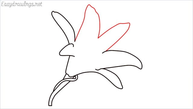 how to draw a lily step (7)