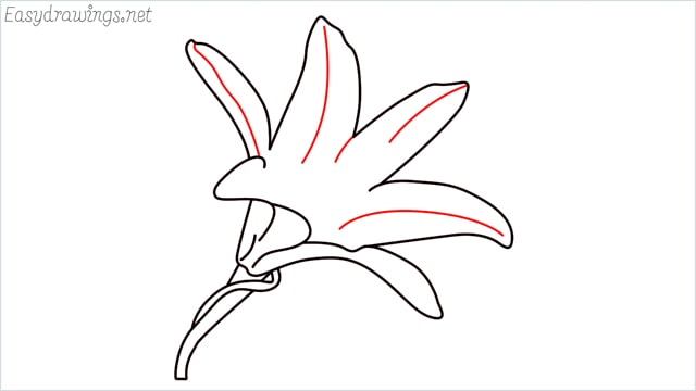 how to draw a lily step (9)