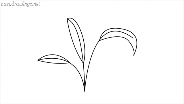 how to draw a little bush drawing step by step for beginners