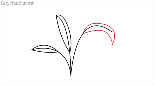 how to draw a little bush step (6)