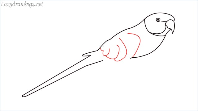 how to draw a parrot step (5)