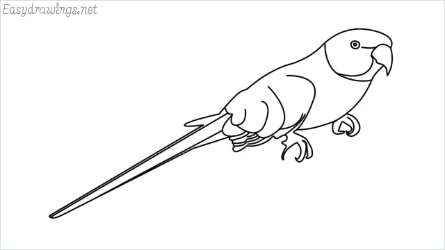 how to draw a parrot step by step for beginners