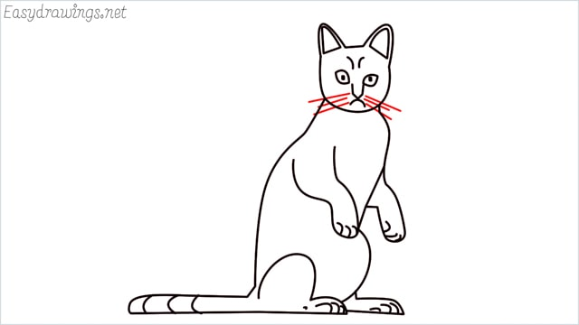 how to draw a sitting cat (15)