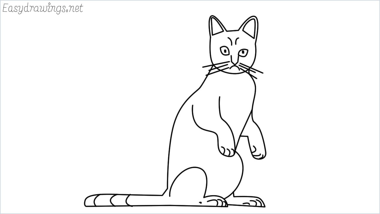 how to draw a sitting cat step by step for beginners