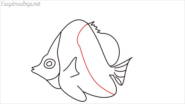 how to draw an angelfish step (11)