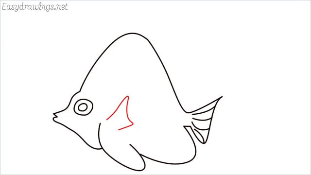 how to draw an angelfish step (8)