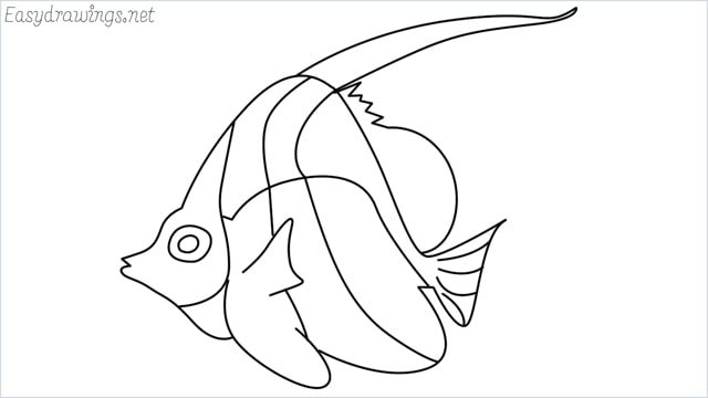 how to draw an angelfish step by step for beginners