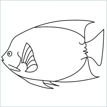 King Angelfish drawing