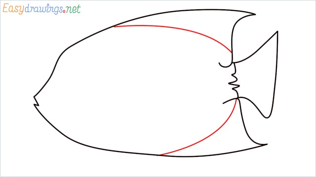 how to draw a King Angelfish step (6)