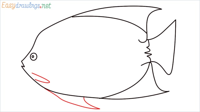 how to draw a King Angelfish step (8)