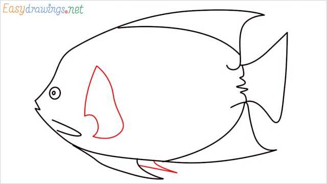 how to draw a King Angelfish step (9)