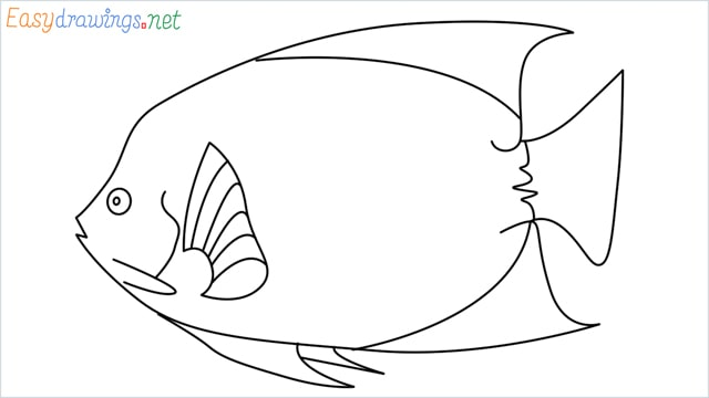 how to draw a King Angelfish step by step for beginners