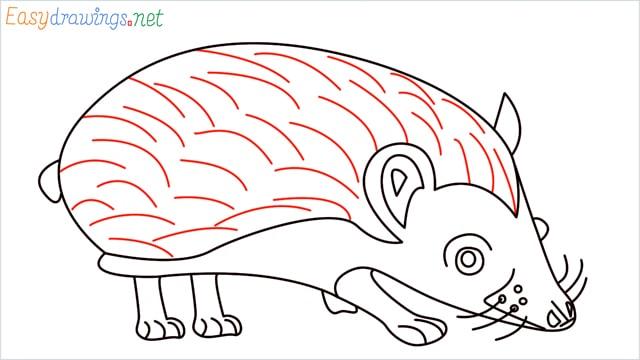 how to draw a hedgehog step (12)