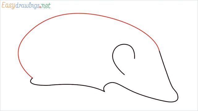 how to draw a hedgehog step (3)