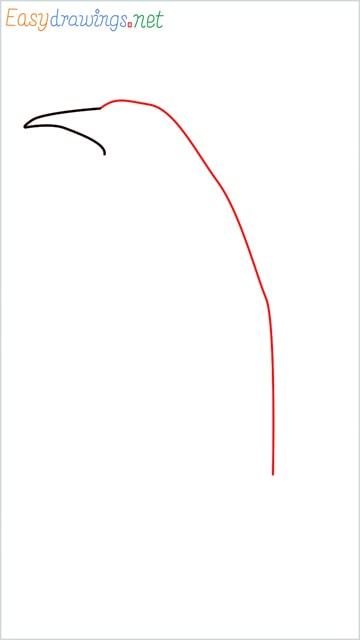 how to draw a penguin step (2)