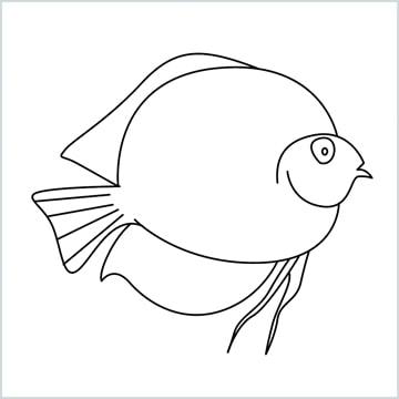Discus Fish drawing